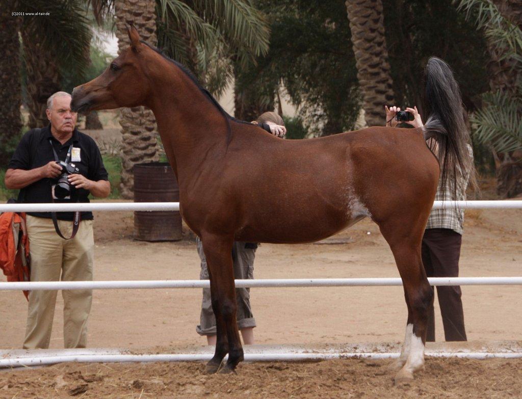 WAHO111107KSL-Al-Nasser-042.jpg
