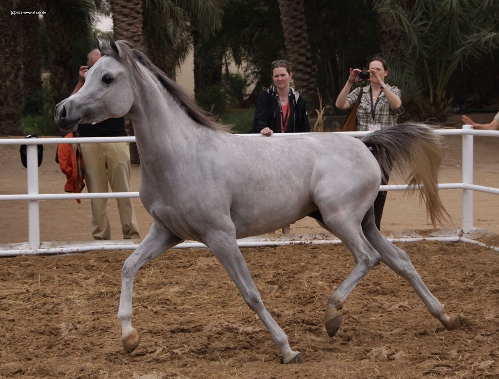 WAHO111107KSL-Al-Nasser-050.jpg