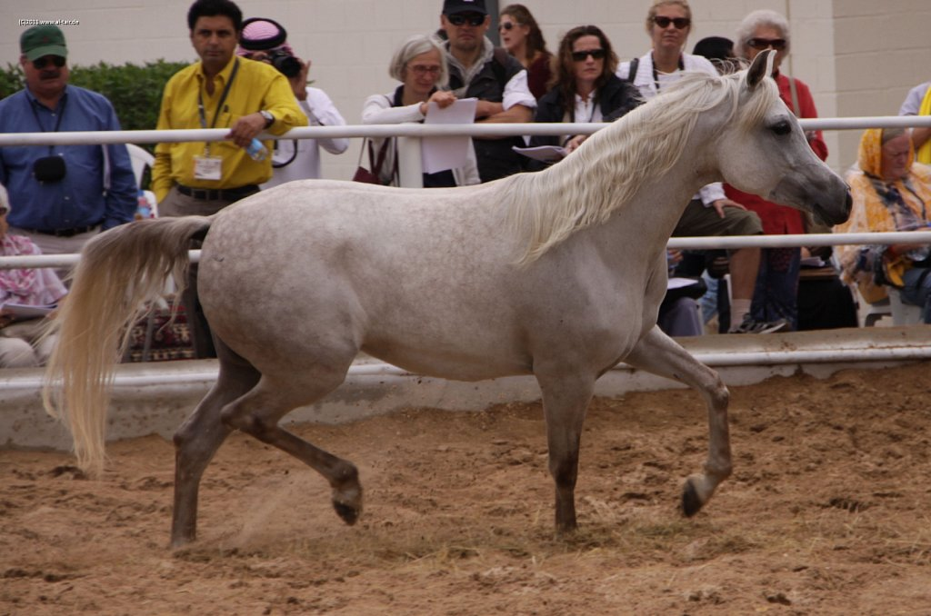 WAHO111107KSL-Al-Nasser-062.jpg