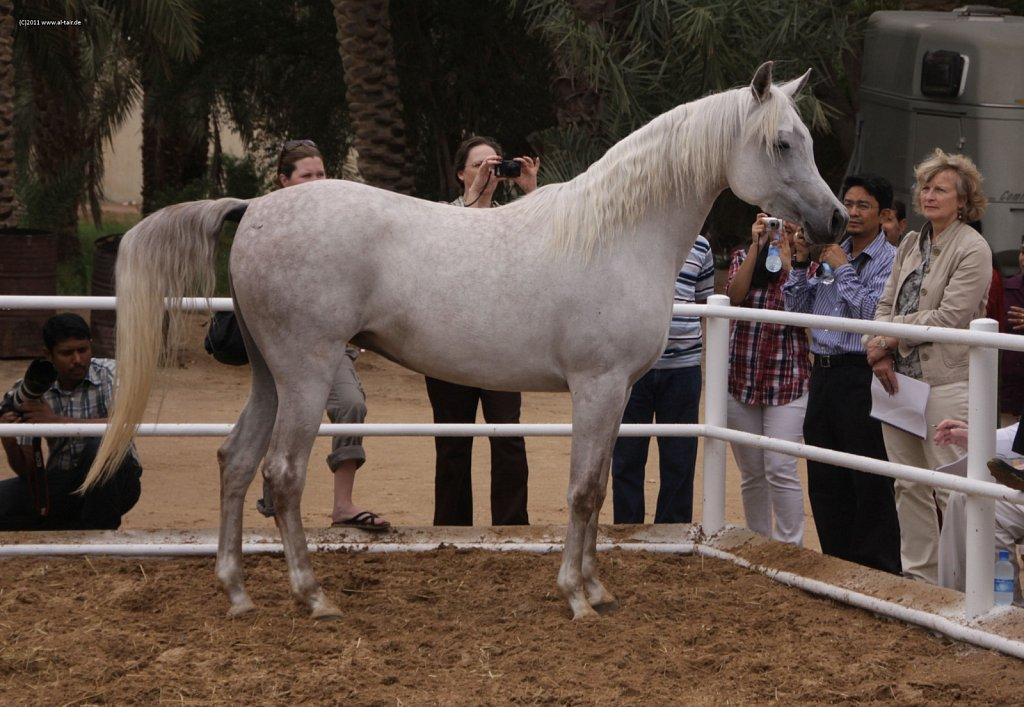 WAHO111107KSL-Al-Nasser-063.jpg