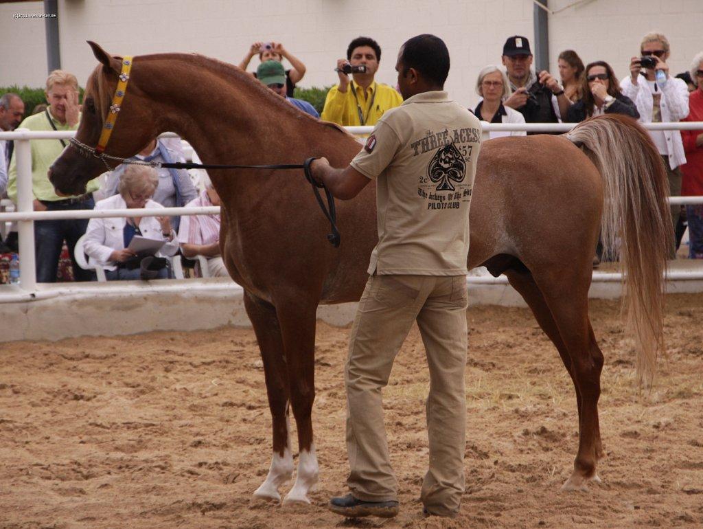 WAHO111107KSL-Al-Nasser-070.jpg