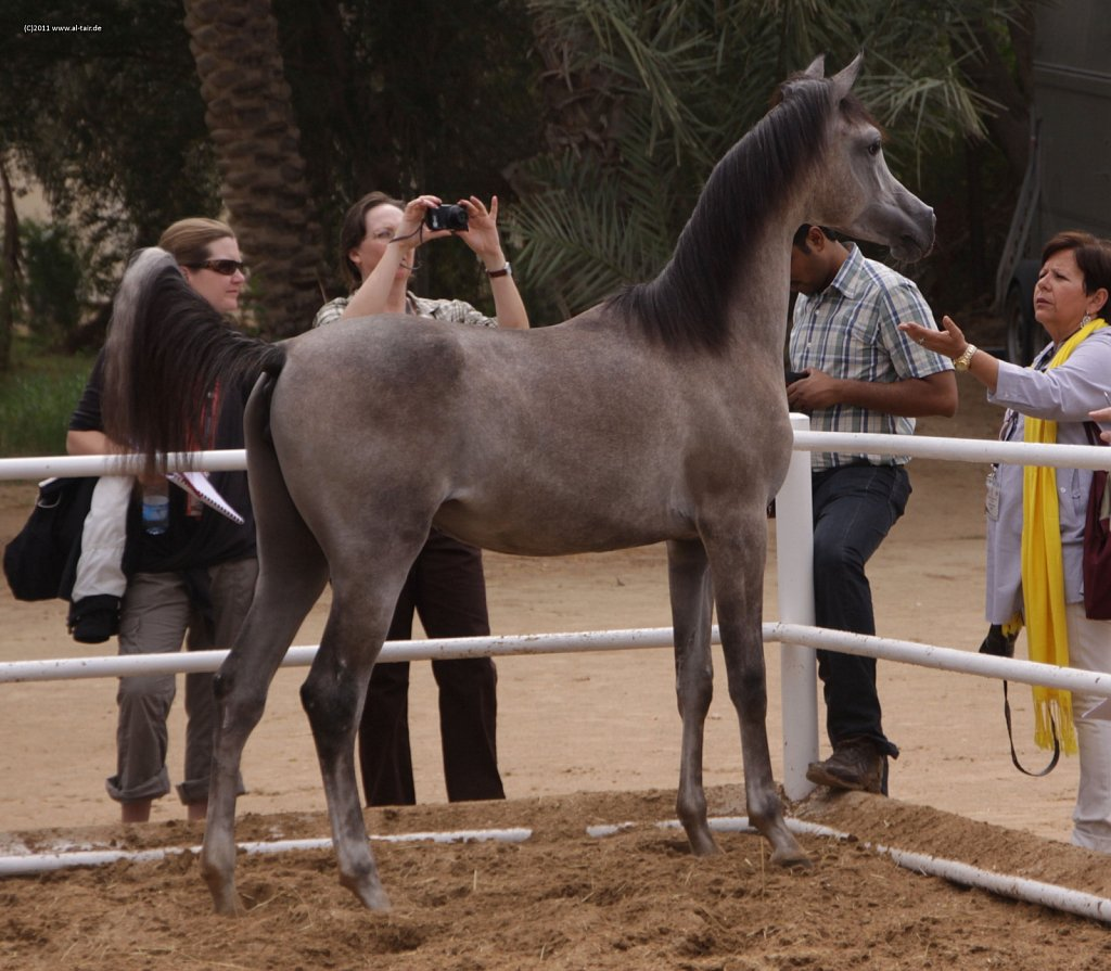 WAHO111107KSL-Al-Nasser-095.jpg