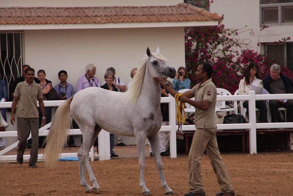 WAHO111107KSL-Al-Nasser-023.jpg