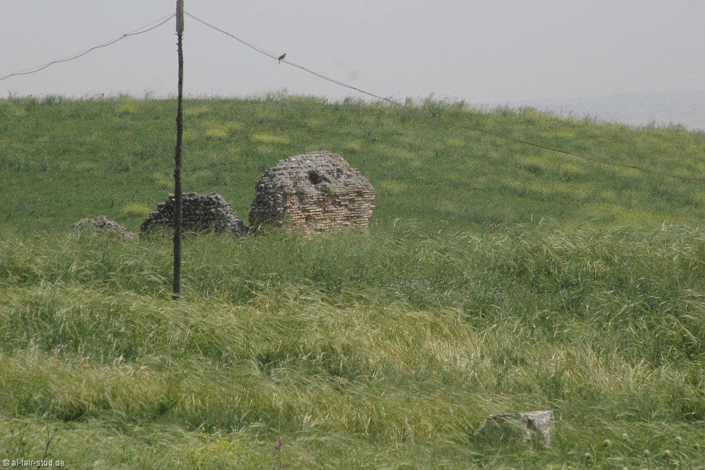 2007-05-04-1058-WAHO-SYR-KSL-IMG-8366.jpg
